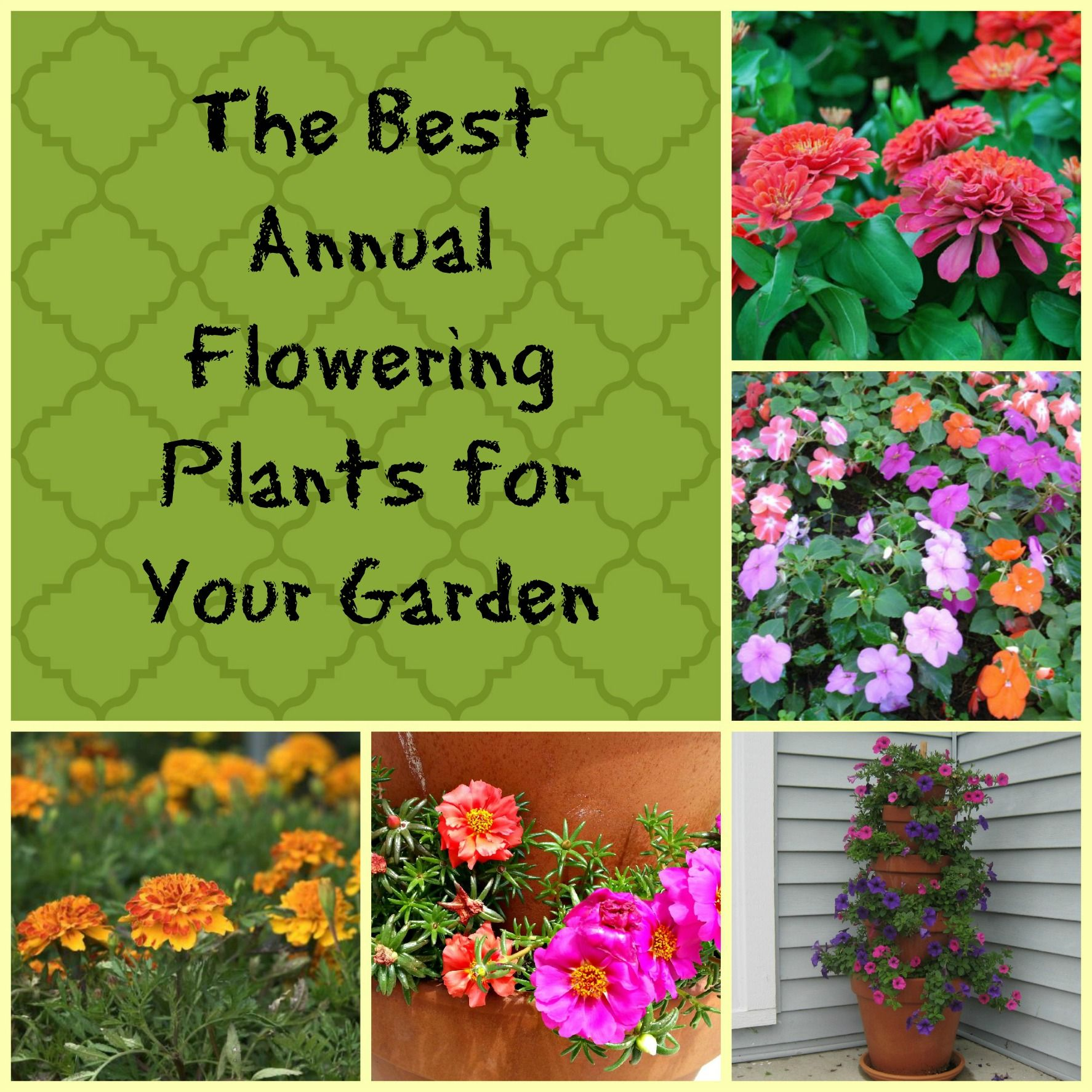 The Best Annual Flowering Plants For Your Garden 400 x 300
