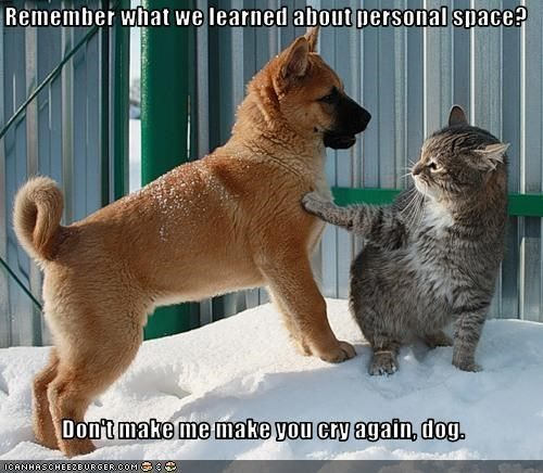 8 Dogs Who Don T Understand The Concept Of Personal Space Funny Animals Funny Dogs Funny Cat Memes