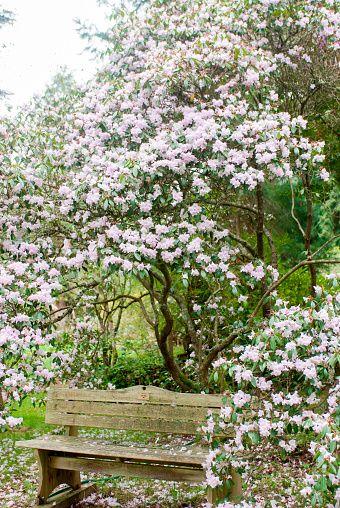 Meerkerk Rhododendron Gardens near Coupeville on Whidbey Island ...