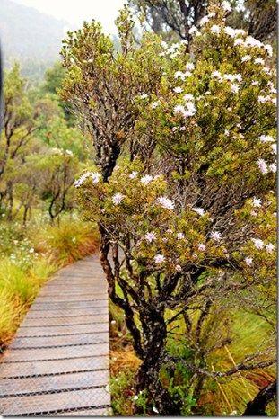 Cradle Mountain in Tasmania, Australia   l   Read more on wanderluststorytellers.com.au