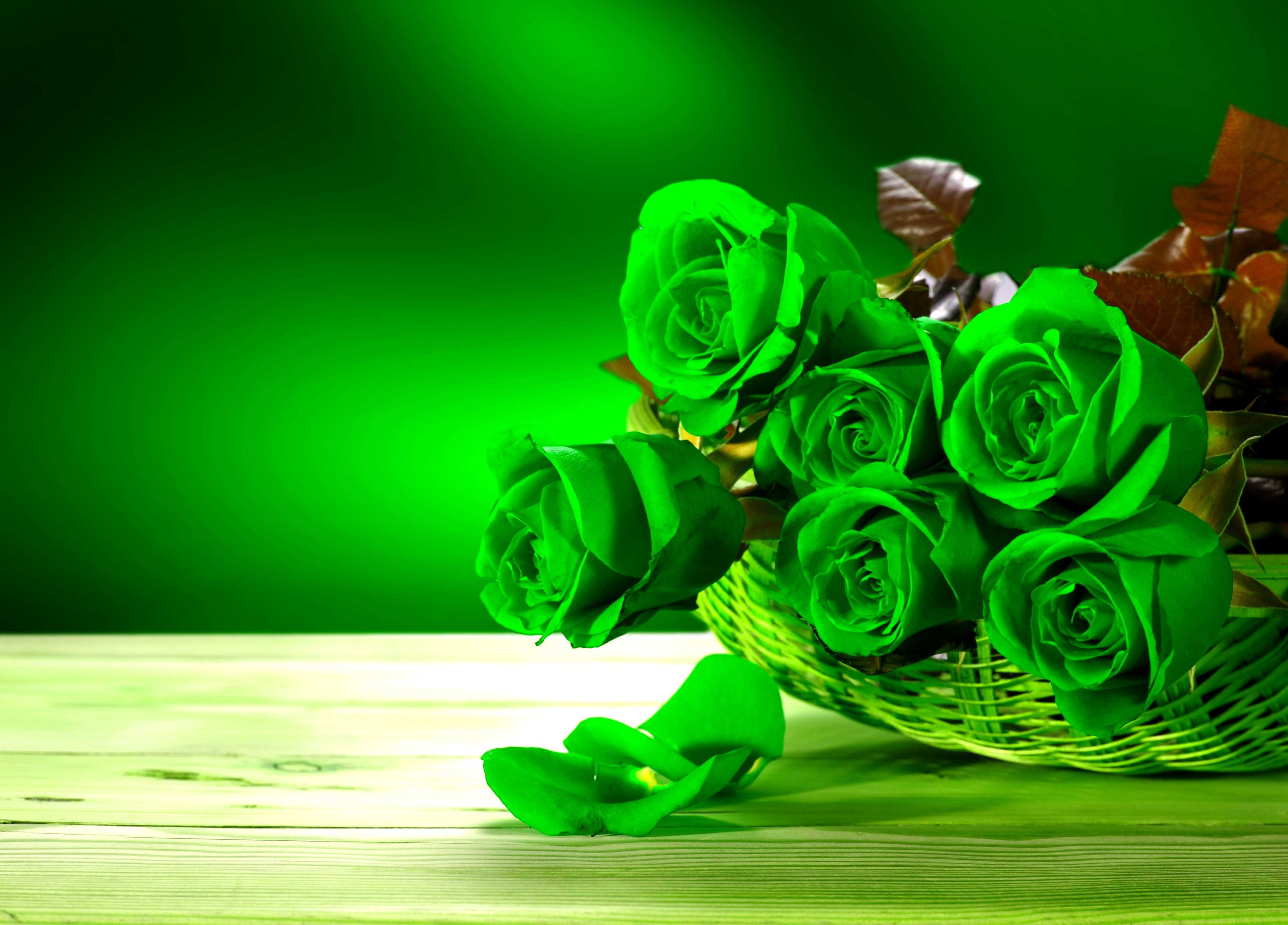 The Meaning And Top 19 Beautiful Green Roses Rose Flower Green