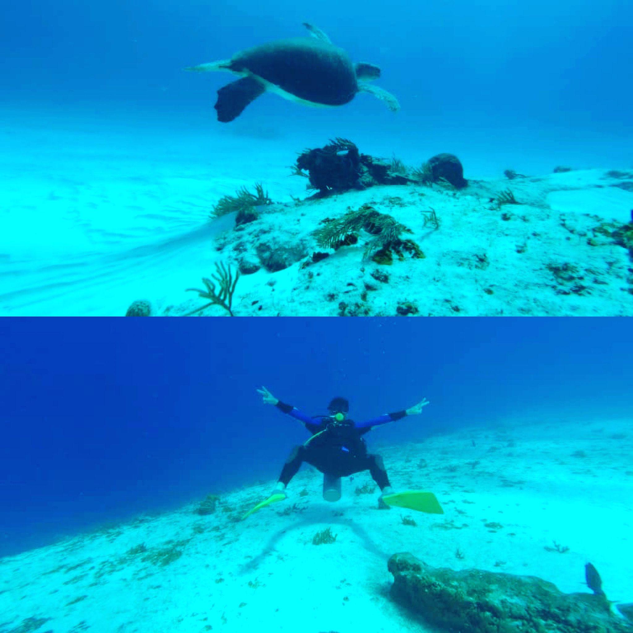 Pin on Scuba Diving Koh Tao