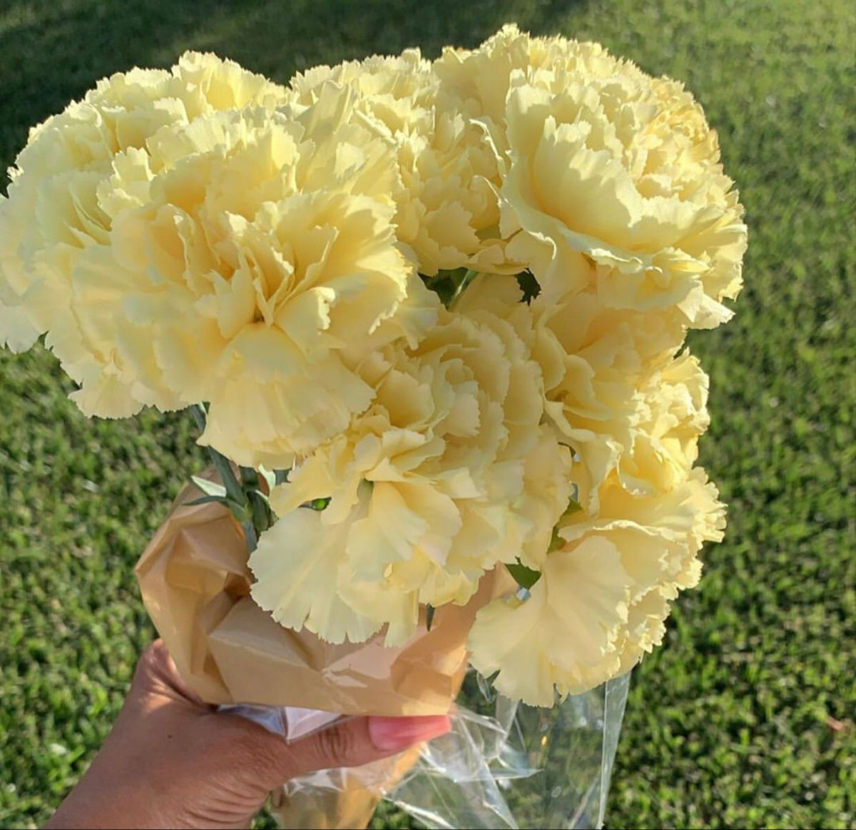 Yellow Carnations In 2020 Yellow Carnations Flowers For Sale Carnation Flower