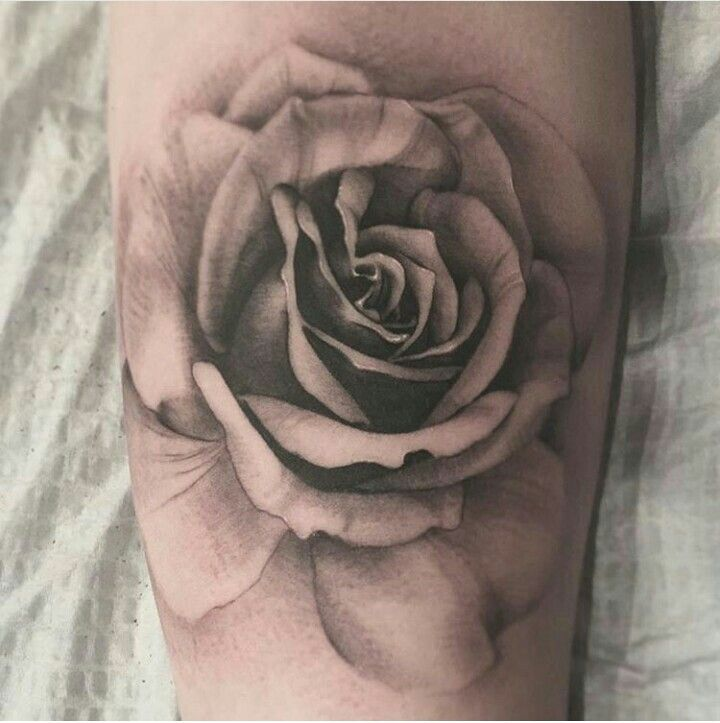 Black And Grey Rose Tatoo Creativity Pinterest Tattoos Rose