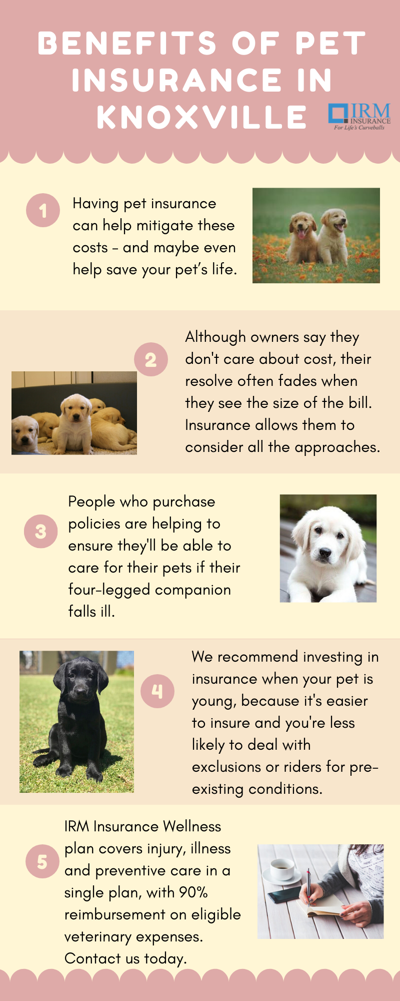 Pet Insurance Knoxville In 2020 Pet Insurance Knoxville Insurance