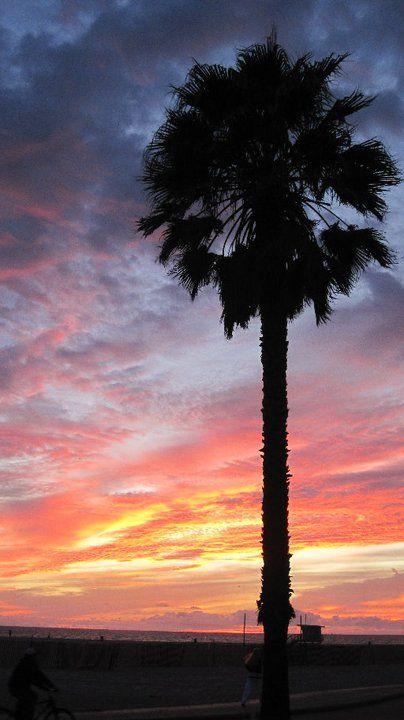 breathtaking - Los Angeles palm