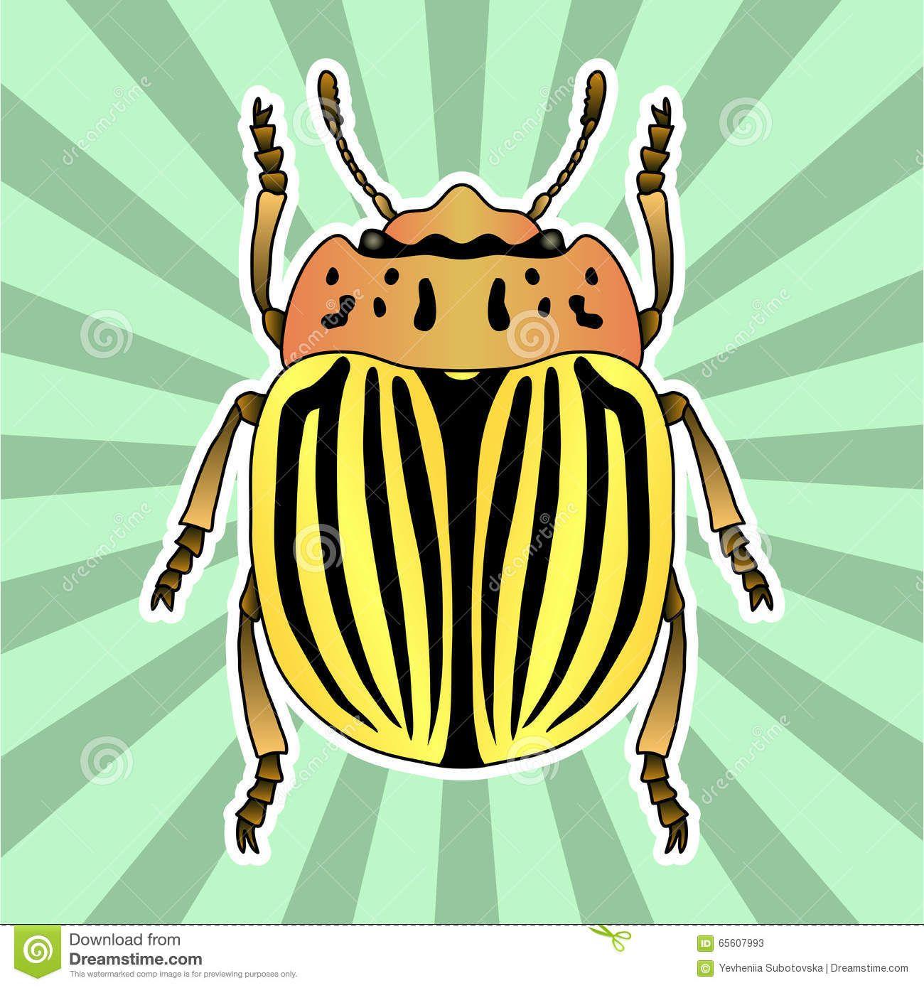 Insect Anatomy Sticker Pyrrhocoris Apterus Beetle Bug Soldier