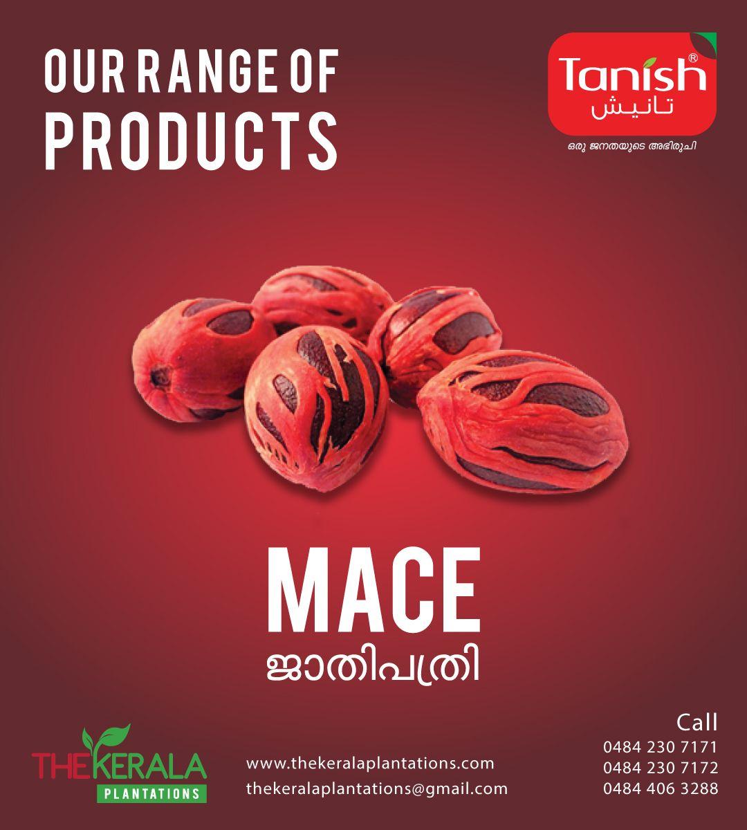 Tanish Introduce Natural Mace Call Us At 0484 2307171 0484 2307172 0484 4063288 For More Details Mail Us At Thekeralaplantations Gmail Com Or Mace Gmail