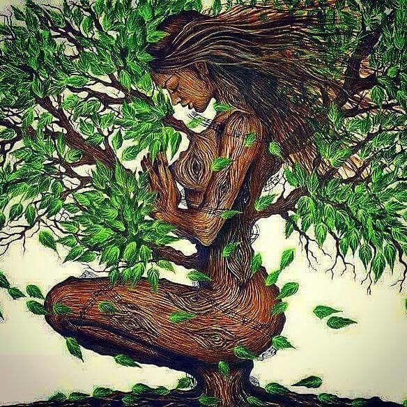 Mulher árvore