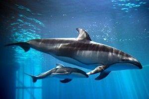 Dolphin Baby Boy at Shedd Aquarium