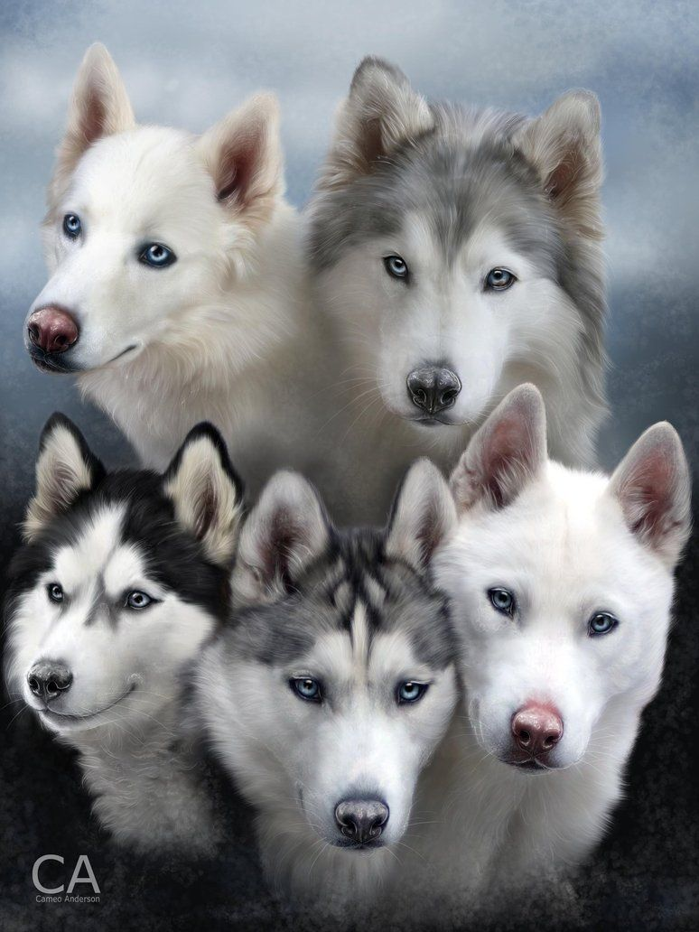 The Famous Fivesibes By Cameoanderson On Deviantart Com Siberian