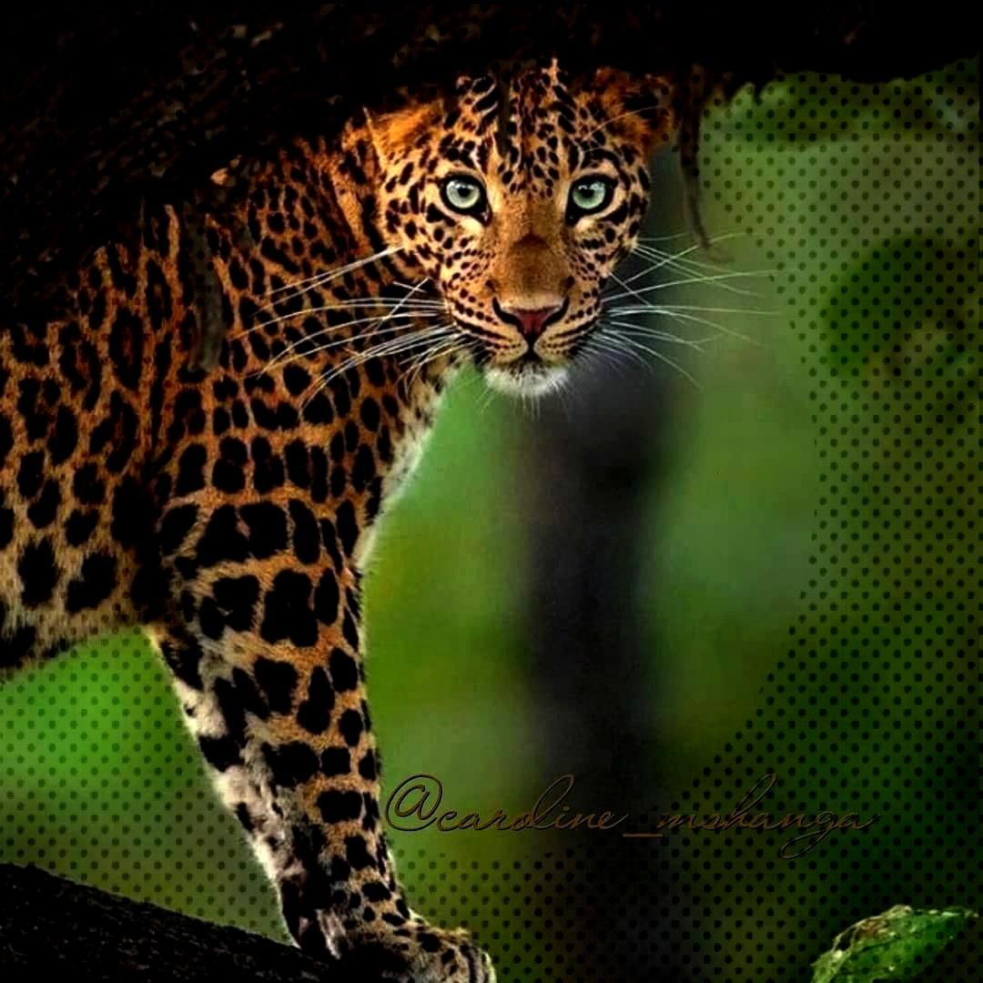 """have the power to speak a great language.""""""""Ananimal'seyes have the power to speak a great l"""