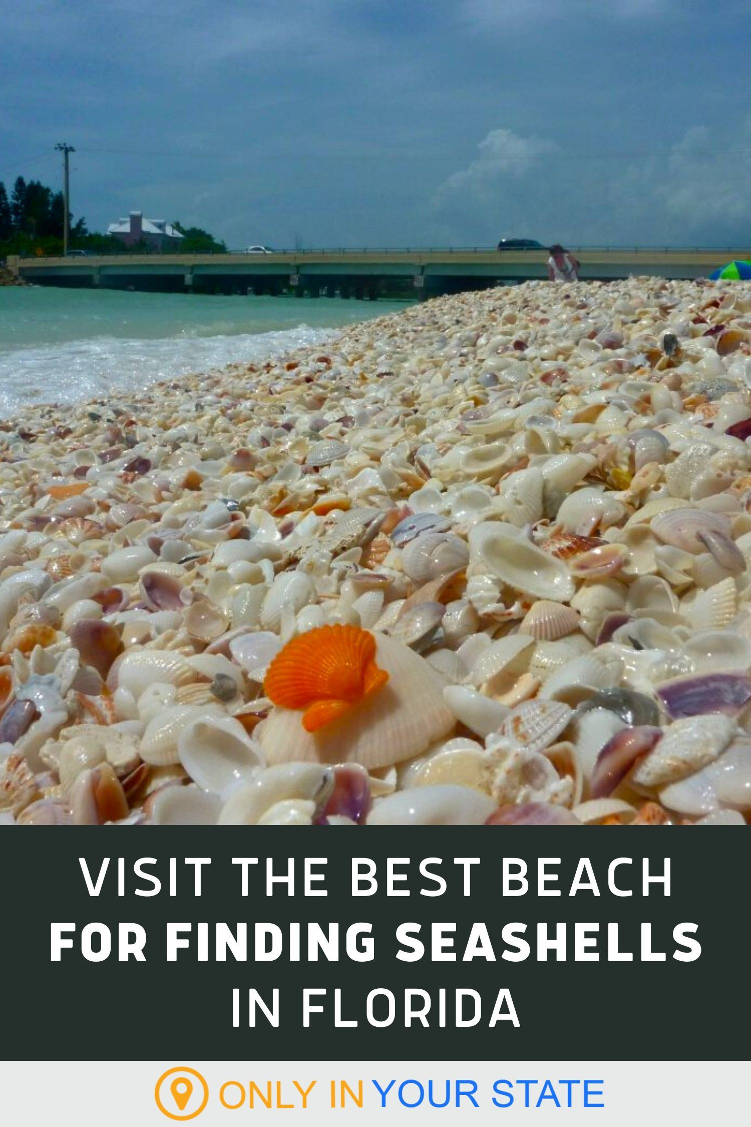 This Hidden Beach Along The Florida Gulf Is The Best Place To Find Seashells In 2021 Sea Shells Florida Beach Trip