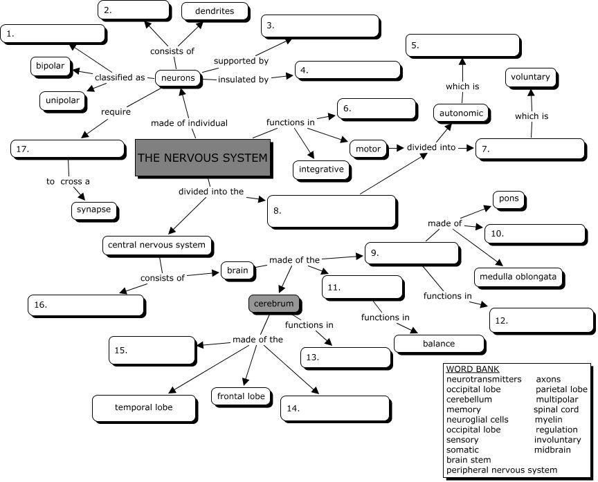 nervous system concept map fit4action pinterest nervous system school and homeschool. Black Bedroom Furniture Sets. Home Design Ideas