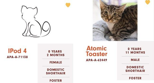 Cats At 'Austin Pets Alive!' Have The Funniest Names