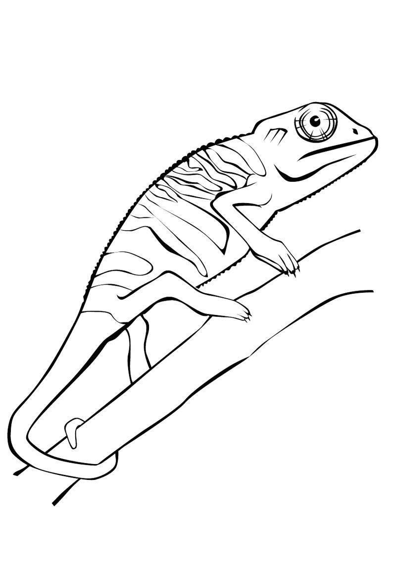 Malvorlagen Chamaleon