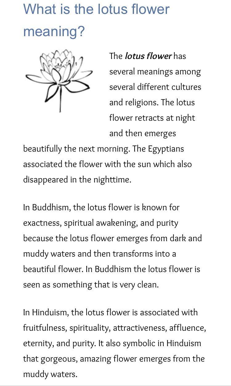 Lotus Flower Symbolism Meaning Images Flower Wallpaper Hd
