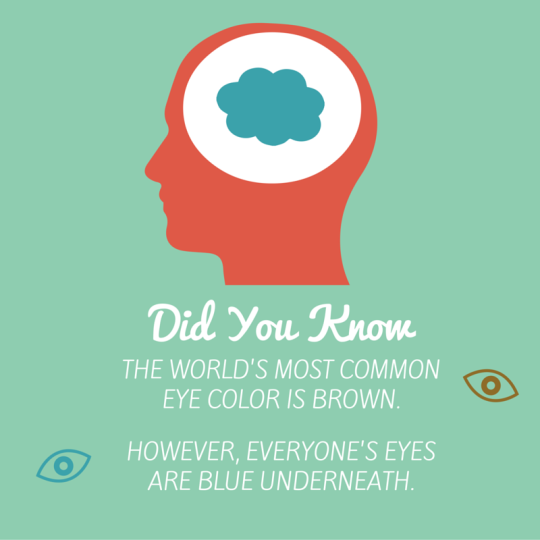 Eye Fact: Did you know that brown eyes are actually blue ...