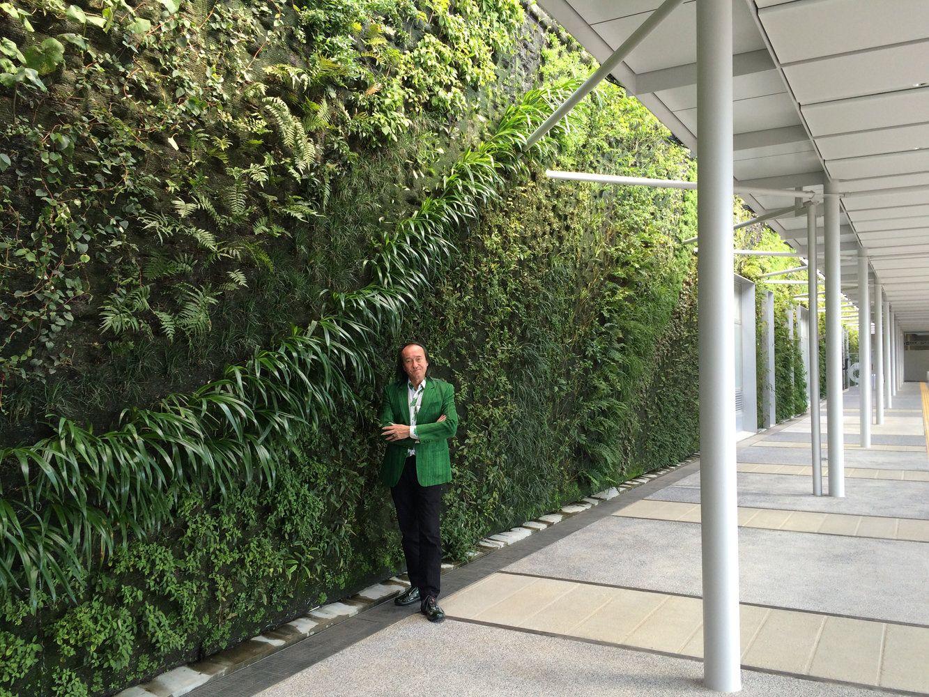 Não se pode falar em jardim vertical sem citar Patrick Blanc, considerado o pai da parede verde. Blanc é um respeitadíssimo botânico e paisagista que ganhou fa