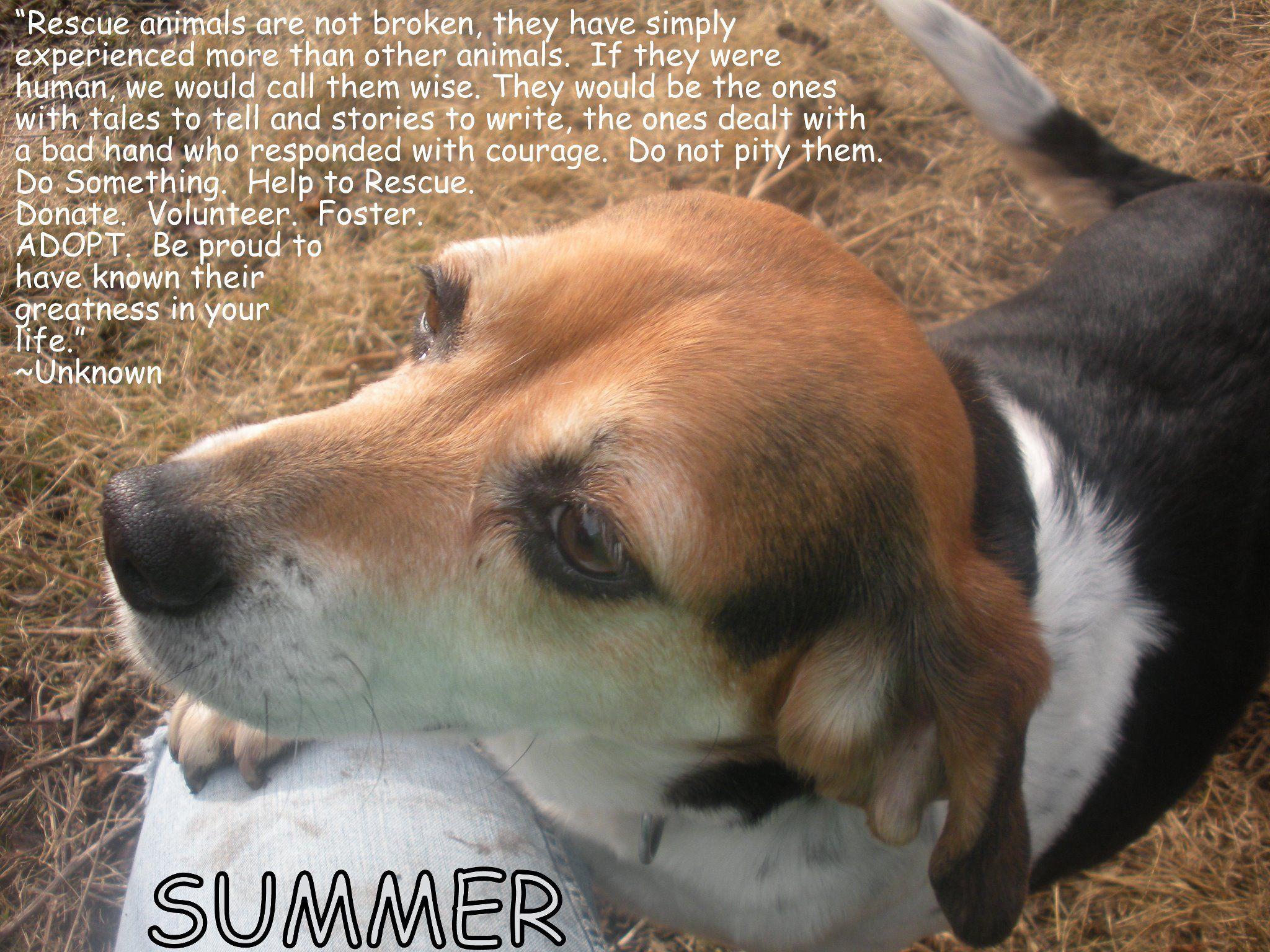 Forever Home Beagle Rescue We Are A Small 501 C 3 No Kill Beagle