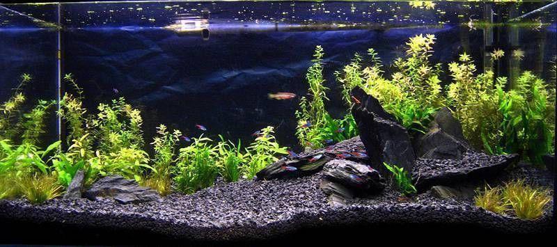 Black Basalt Substrate Fish Tank Gravel Fish Tank Cleaning Fish