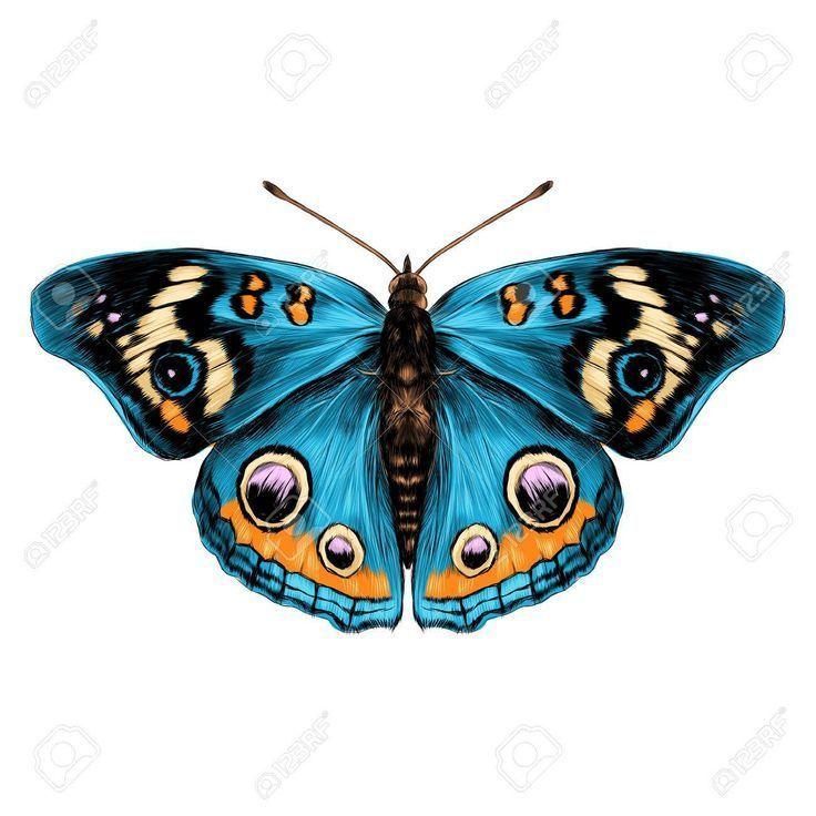 schmetterling mit offenen flugeln draufsicht der symmetrie skizzieren sie das diagramm vektorfarbe ari sanat kelebekler desenler eule vektor erstellen online