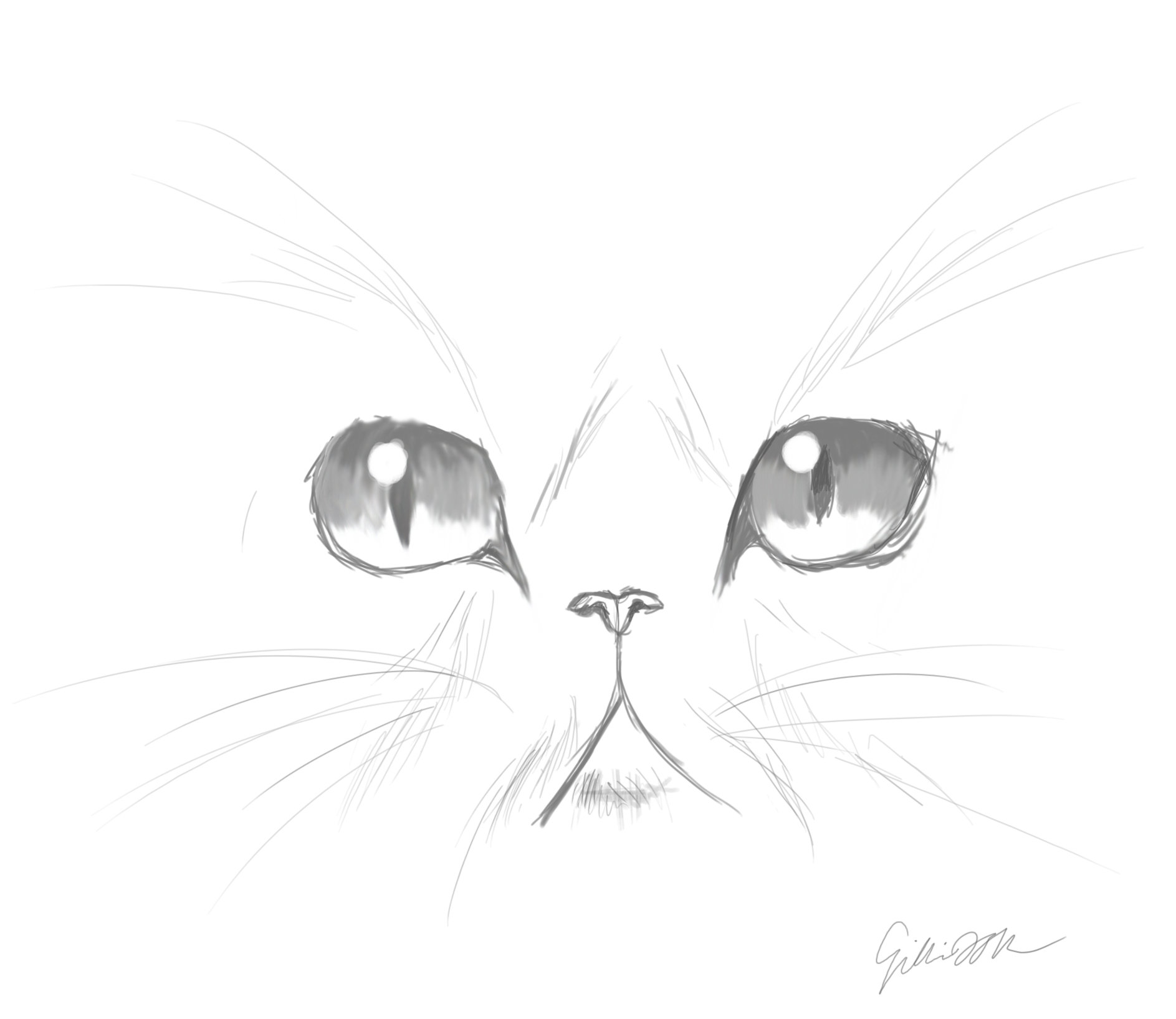 Line Drawing Of A Cat Face : Images for gt cute cat face sketches art