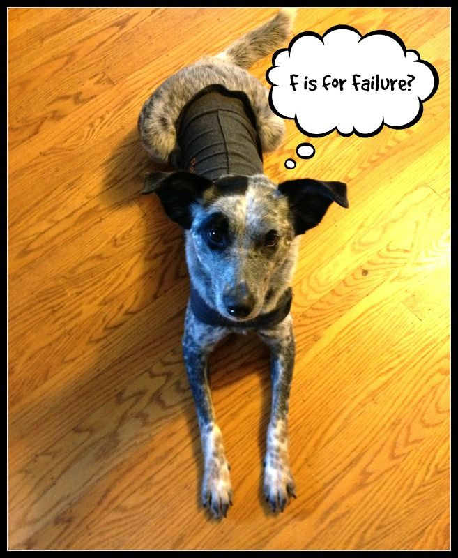 Eliminating The F Word Dog Info Your Dog Training Your Dog