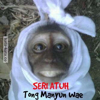Monkey Smile Gambar Hantu Lucu Gambar Lucu