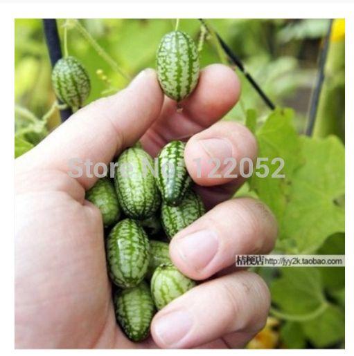 Thumb watermeloen zaden, mini watermeloen Peipujinuo, 20 stuks / zak
