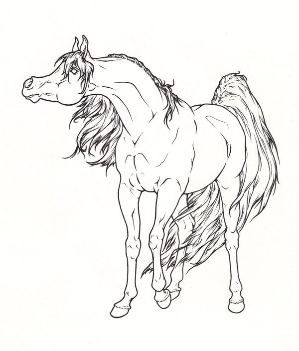Arabian Horse Lineart by ReQuay on deviantART Coloring