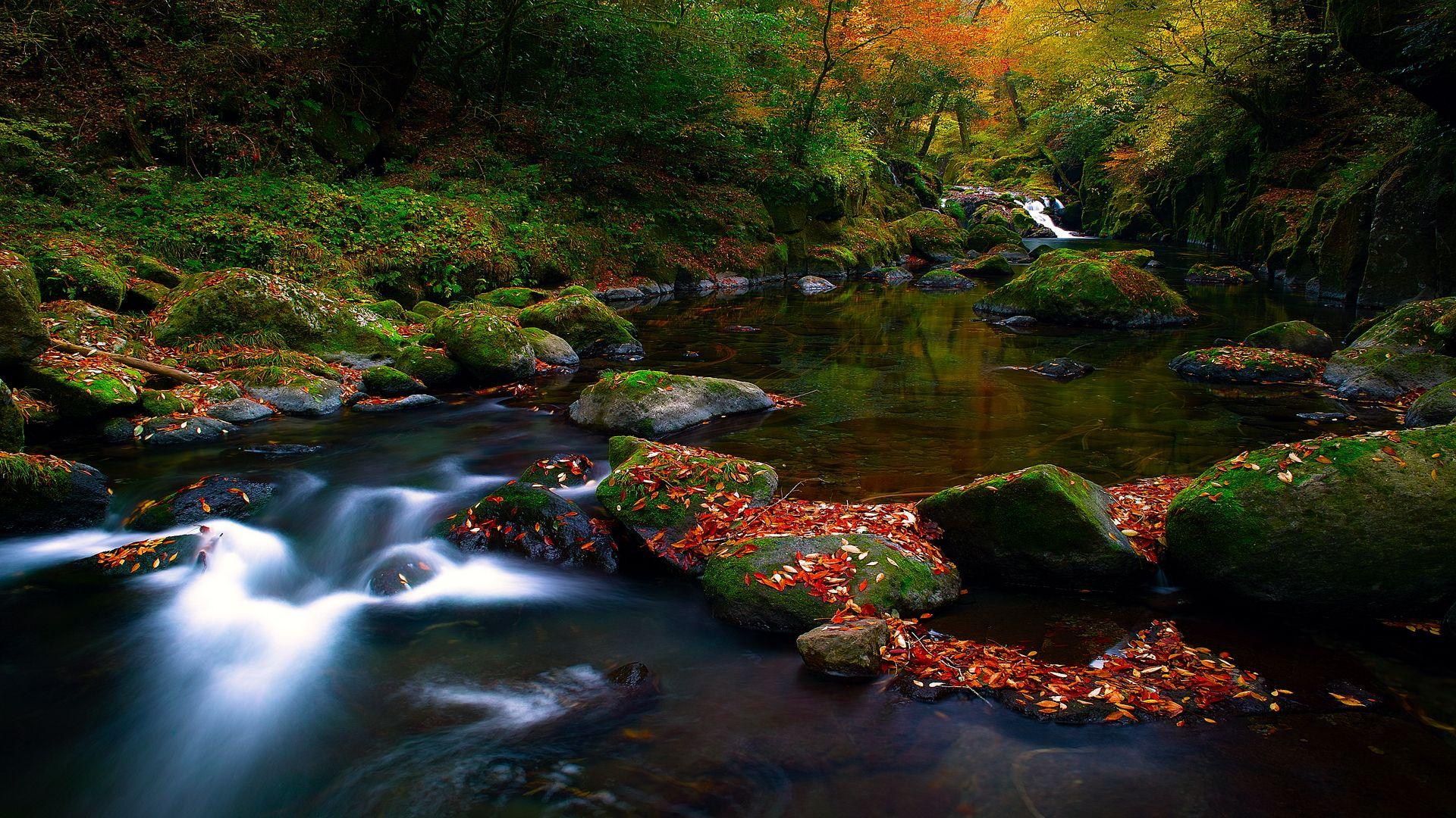 Autumn Leaves Nature Screensavers Beautiful Nature Autumn Nature