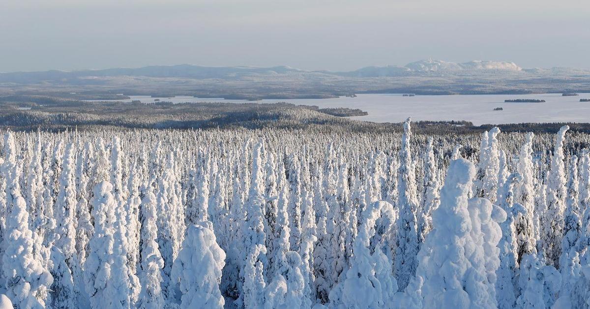 Nimiä kerätään vimmatusti, jota Suomen metsiä ei yhtiöitettäisi ja myytäisi ulkomaisille sijoittajille.