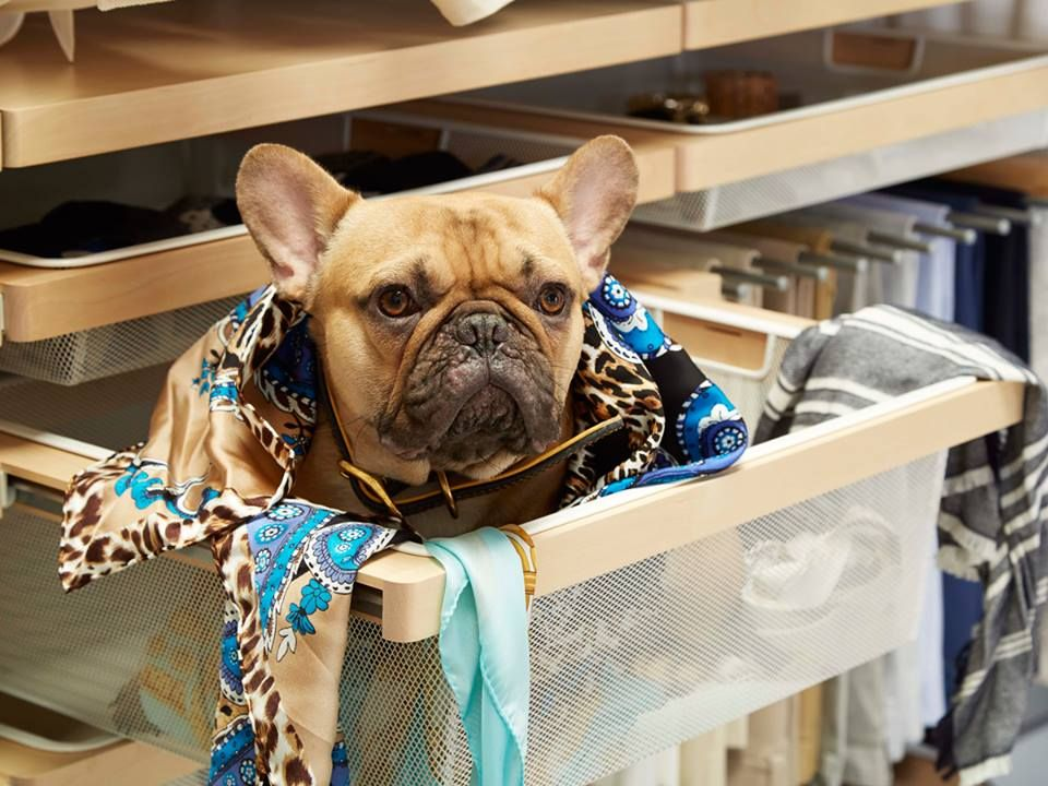 The Container Store Is Dog Friendly Leashed Dogs Are Welcome To