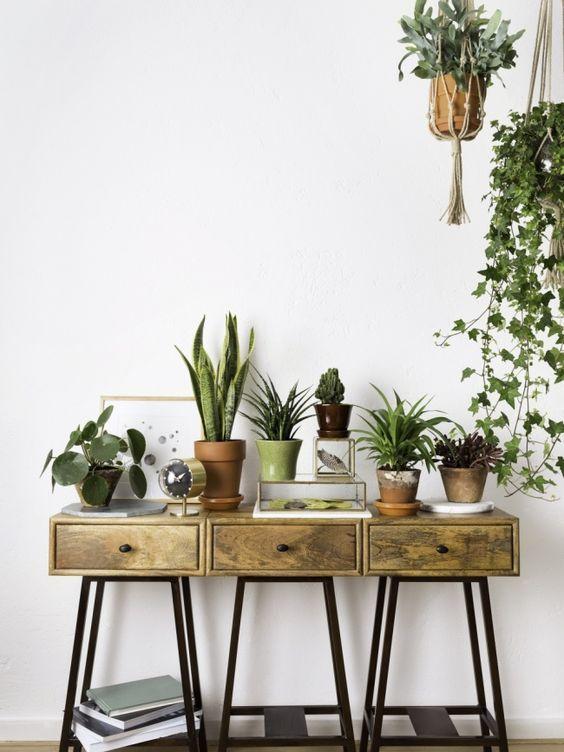 Luftreinigenden Pflanzen Pinterest Natalia Escaño Interiores - decoracion de interiores con plantas