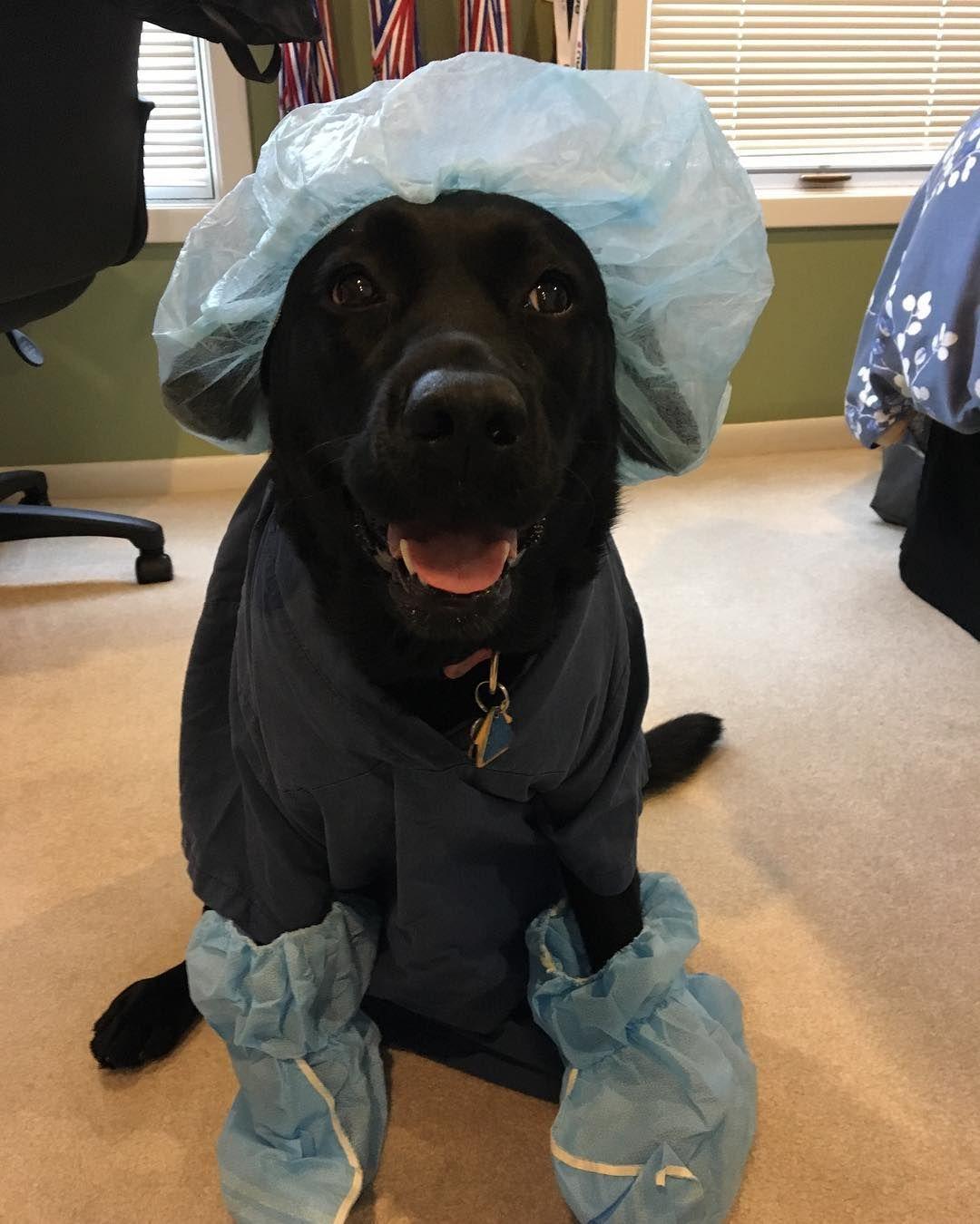 Animal Jobs Near Me 2020 Dog doctor, Animals, Dog lovers