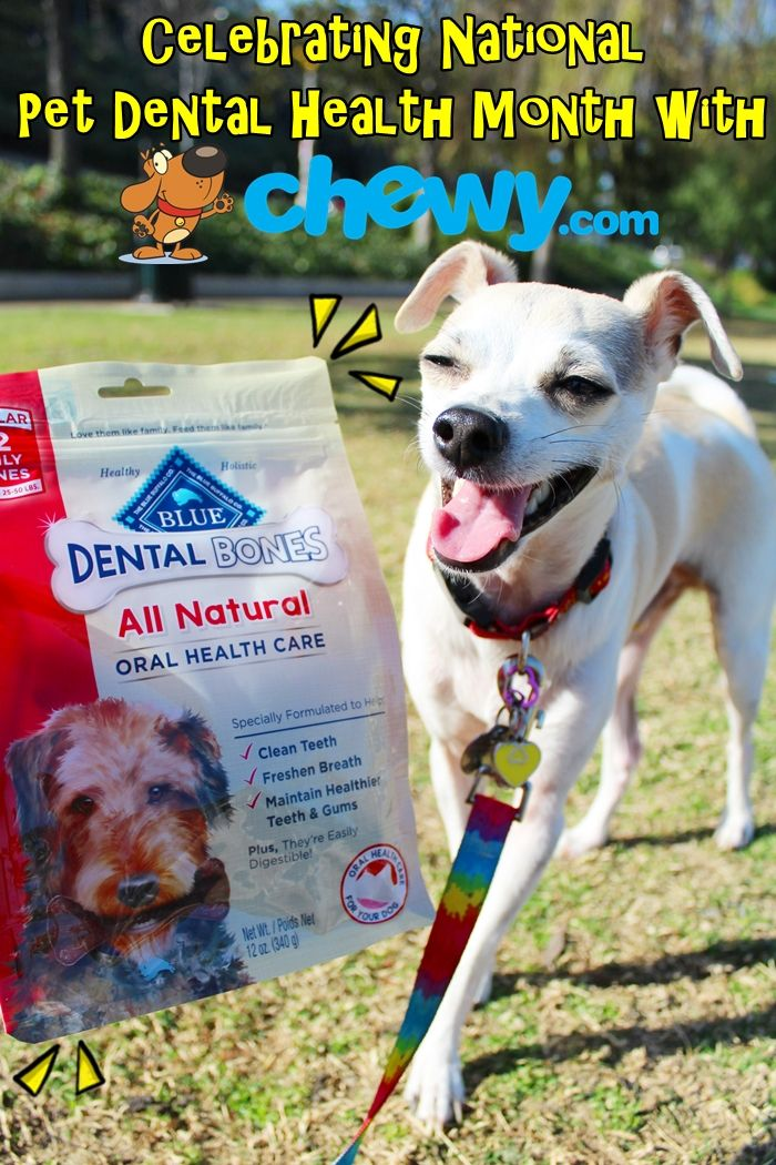 National Pet Dental Health Month With At Chewy Com Dog Food