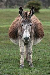 Will It Be Twins Animals Donkey Horses