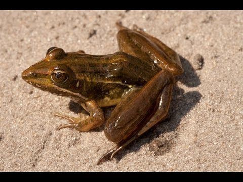 Fear Of Frogs And Toads Ranidaphobia Frog And Toad Frog Toad