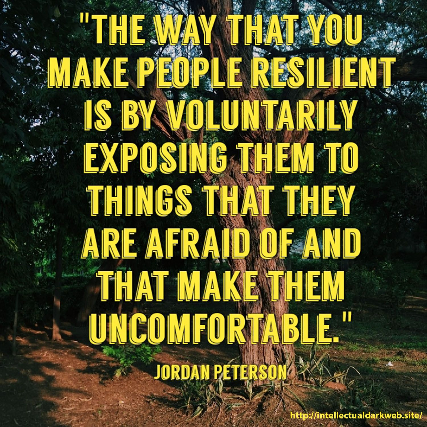 Jordan Peterson Quote About Making People Feel Comfortable How To Make Jordan Peterson Resilience