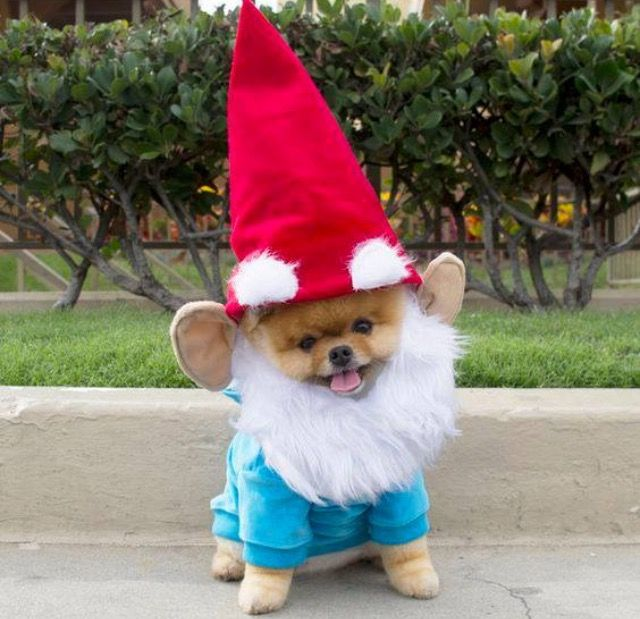 Pin by lilly miel on animales bonitos pinterest costumes dog dog costumes for halloween simple do it yourself costumes for your pets easy yet funny ways to dress up your dog for halloween solutioingenieria Image collections