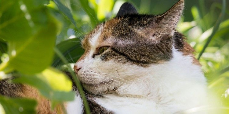 Spotlight on Science: Domestic Cats (Felis Catus) Discriminate Their Names From Other Words — Katzenworld