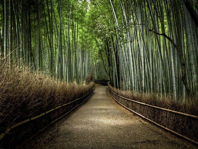 Calming Bamboo Forest - Arashiyama, Japan
