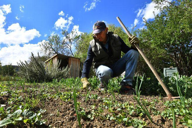 Jardinage - Quand planter tomates, haricots ou radis dans son potager ? Voici le calendrier des ...