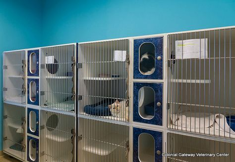 Feline Facilities Cat Hotel Pet Clinic Animal Room