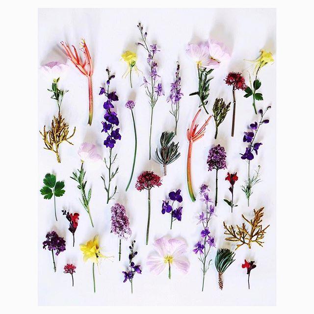 High desert Spring! .  .  .  .  #highdesert #simplysantafe #spring #flowers #wildflowers   #flowersofinstagram #myfujifilm #foraged #found #finditliveit #fujifilmx_us #xt2  #exploretocreate #huffpostgram #ignantpicoftheday @ignant  #rslove #dslooking #slowliving #everythingispossible #rsfloral #flashofdelight #verilymoment #exploretocreate @ignant #ignantpicoftheday #verilymoment #theartofslowliving #slowliving #thehappynow #broadmag #ourmomentum #bloom #somewheremagazine