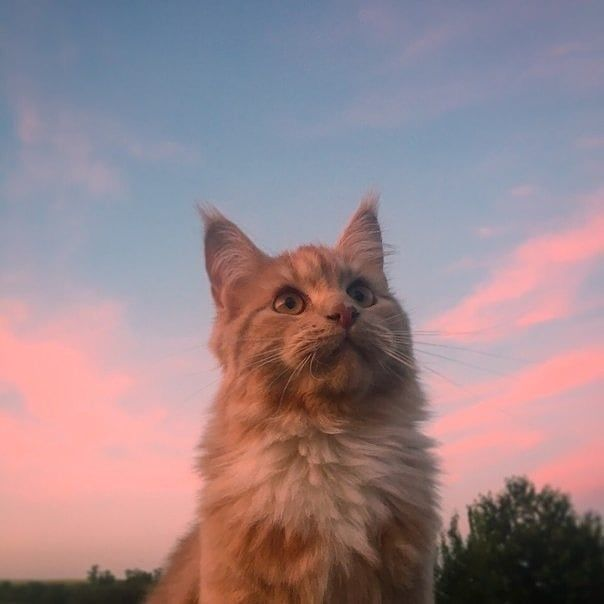 귀여운 고양이 사진 모음 / 고양이 배경화면
