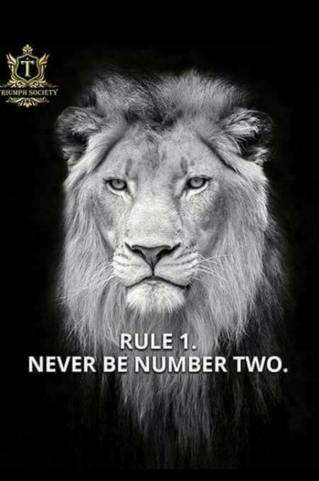Pin by Caren Coultas on LEO | Lion quotes, Short