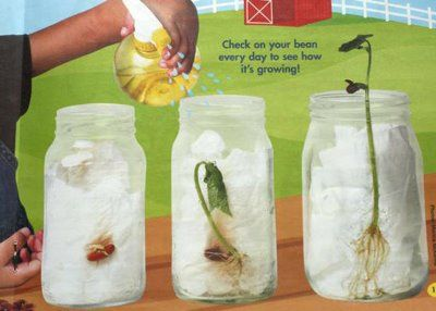 Plant project. Such a good way for kids to learn the process of how a plant grows. you can also have the kids draw out what they think the plant will look like on day 1, 5 , 10 and so on.  -Kaitlyn Aceto