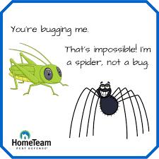 Image Result For Bug Jokes Fun Bug Puns Pinterest Bug Puns